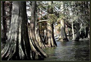 """""""Гуляя по темному лесу по пояс в воде..."""" Озеро Reelfoot Lake."""