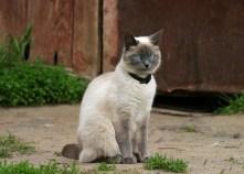 Кот благородного вида в одном из дворов Суздаля.