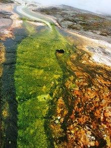 Ручей, вытекающий из Сапфирового водоема. Biscuit basin.
