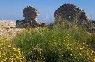 Весенние цветы в замке Chlemoutsi.