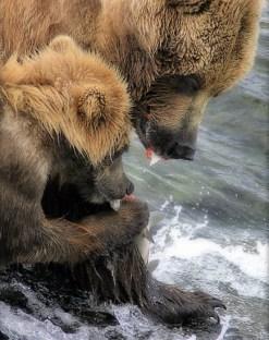 """""""Мать"""" и медвежонок закусывают."""