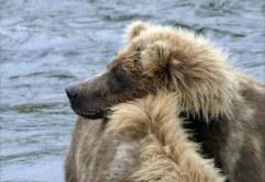 Дозорный медвежонок.