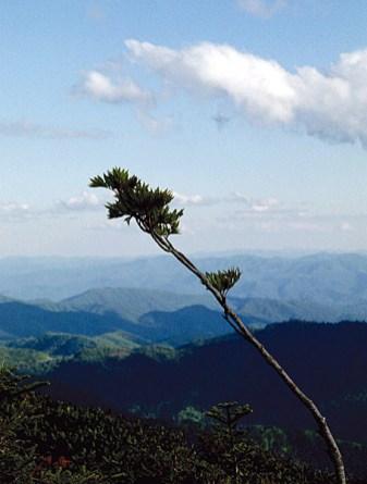 Панорама с вершины горы Mount LeConte.