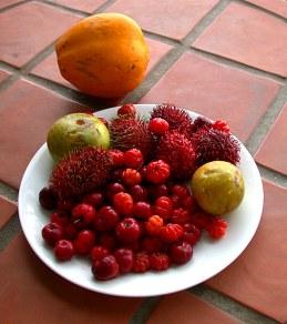Экзотические фрукты: гавайская вишня, мальпигия (acerola), sapotes, rambutan (красный, с колючками, безумно вкусный), папайя.