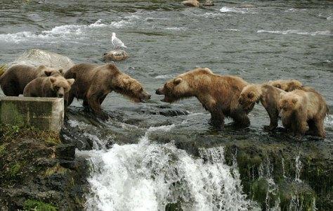 """Нападение группы """"Гопников"""" на Мать и медвежат."""