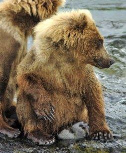 Медвежонок - карапуз.
