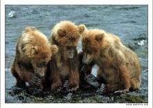 """""""Секрет для Троих"""". Пока мама в стороне ловит лосося, трое сорванцов, сидя на вершине водопада, задумали пакость. Самый главный зачинщик у них левый, нашептывает братьям детали предстоящей операции, а они с упоением слушают."""