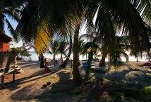 Белье и кокосовые пальмы.