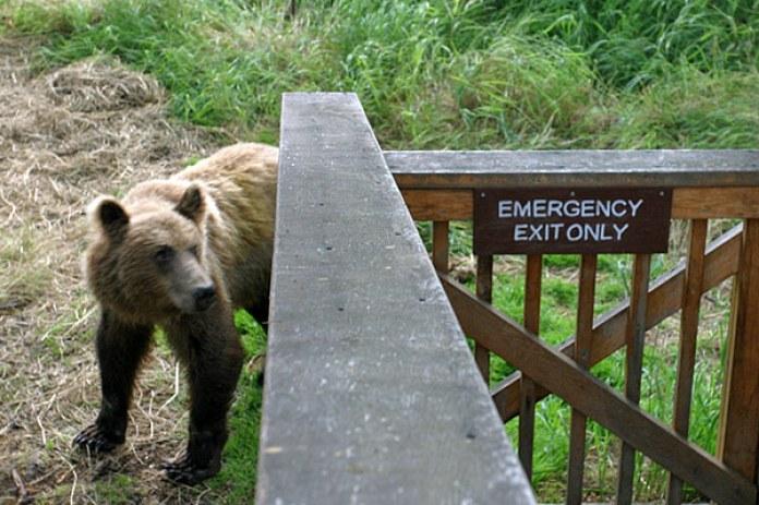 Посторонним медведям вход воспрещен.