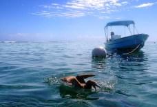 Морская птица олуша (Red-footed Boobie) нападает на акулу-няньку.