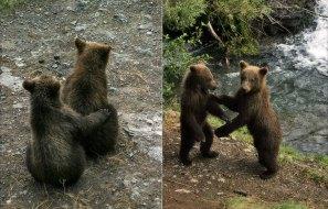 Братья - медвежата.
