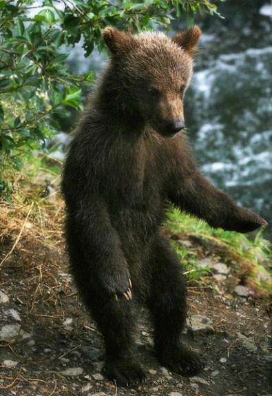 Совсем крохотный медвежонок.