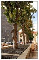 """Деревья """"в броне"""" на одной из улиц Вены."""