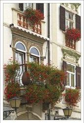 Украшенные цветами фасады домов в Птуе.