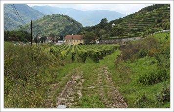 Регион живет за счет виноделия и выращивания фруктов.