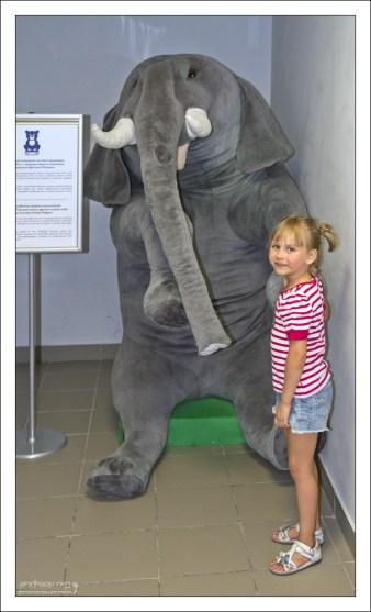 Огромный плюшевый слон был произведен в середине 80-х г.г. по спецзаказу Центрального Детского магазина.