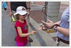 Саша большая любительница змей. Это неядовитая змея вида Mexican milk snake.