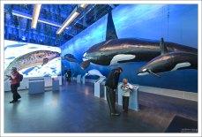 "В музее ""Whales of Iceland""."