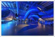 Открылся музей совсем недавно, весной 2015 года. На выставке представлено 23 вида морских млекопитающих, которые водятся в исландских водах, в том числе белуга, горбатый кит, малый полосатик, кашалот, и косатка.