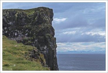Мыс Лаутрабьярг (исл. Látrabjarg) – одно из мест гнездования тупиков в Исландии.