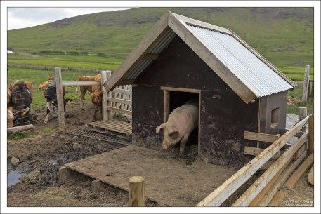 На ферме Erpsstadir.