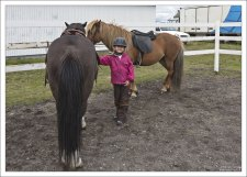 Исландские лошади имеют небольшой рост - до 144 см в холке.