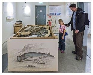 """""""Тактильный стол"""", где дети могут потрогать акулью кожу (как наждак), пощекотать китовый ус, «примерить» плавники и бивни."""