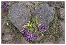 Каменное сердце оттаяло под натиском живой природы :)