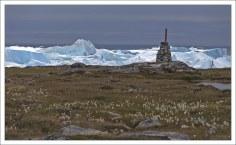 Стебельки Гренландского хлопка или пушицы (лат. Eriophorum scheuchzeri) на фоне айсбергов.