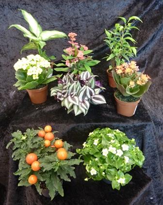 Horticulture  Plantes dintrieur  GARDEN CENTER ANDREFLEURS  Vaud Assens  Jardinerie