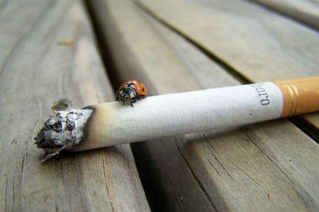 lege-anti-fumat
