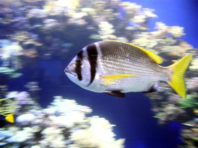 Visita ai pesci di Eilat