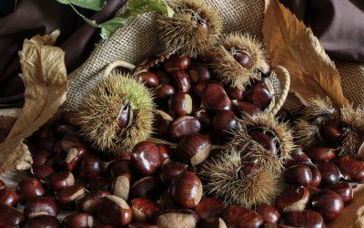 Après les fruits de confiture de printemps et été, quelles recettes de confiture d'automne allez-vous proposer à vos clients ?