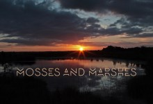 Mosses and Marshes
