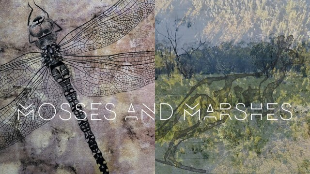 Mosses and Marshes at Qube