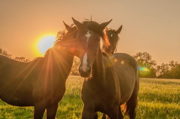 Pferd_DSC6192