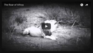 the roar of africa