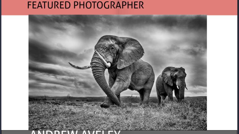 SA Professional Photographers Associateship