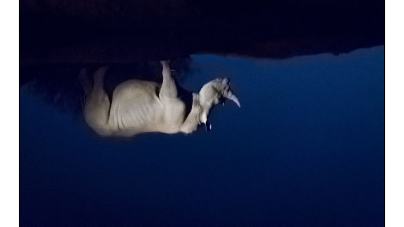 Remembering Rhino's