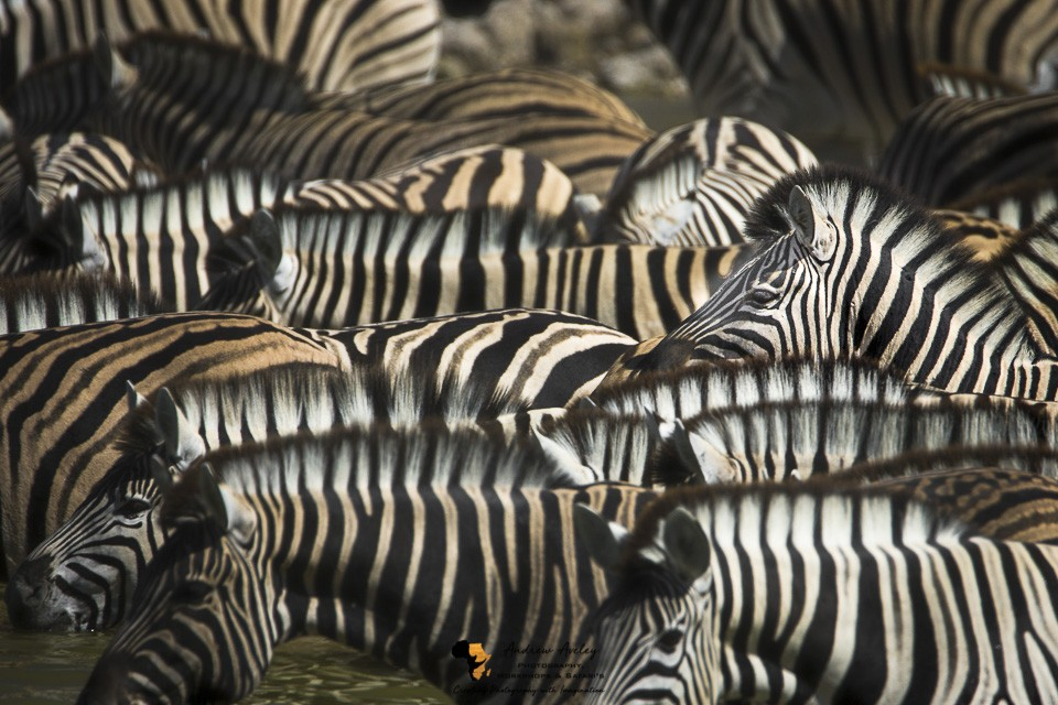 Namibia Wildlife Photography Tour