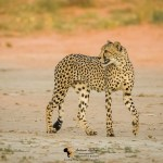Kalahari Photography Workshop - 9 Days