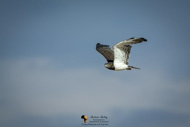 Kalahari Photography Workshop - 9 Days