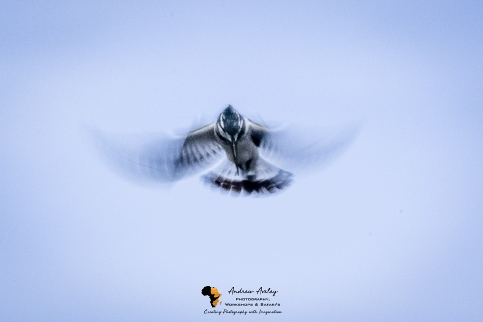 Chobe Bird Photography