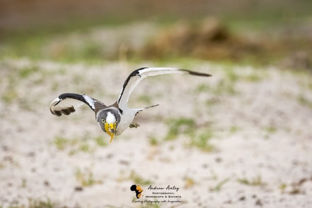 Chobe Bird Photography