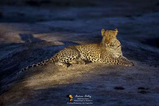 improve your wildlife photography