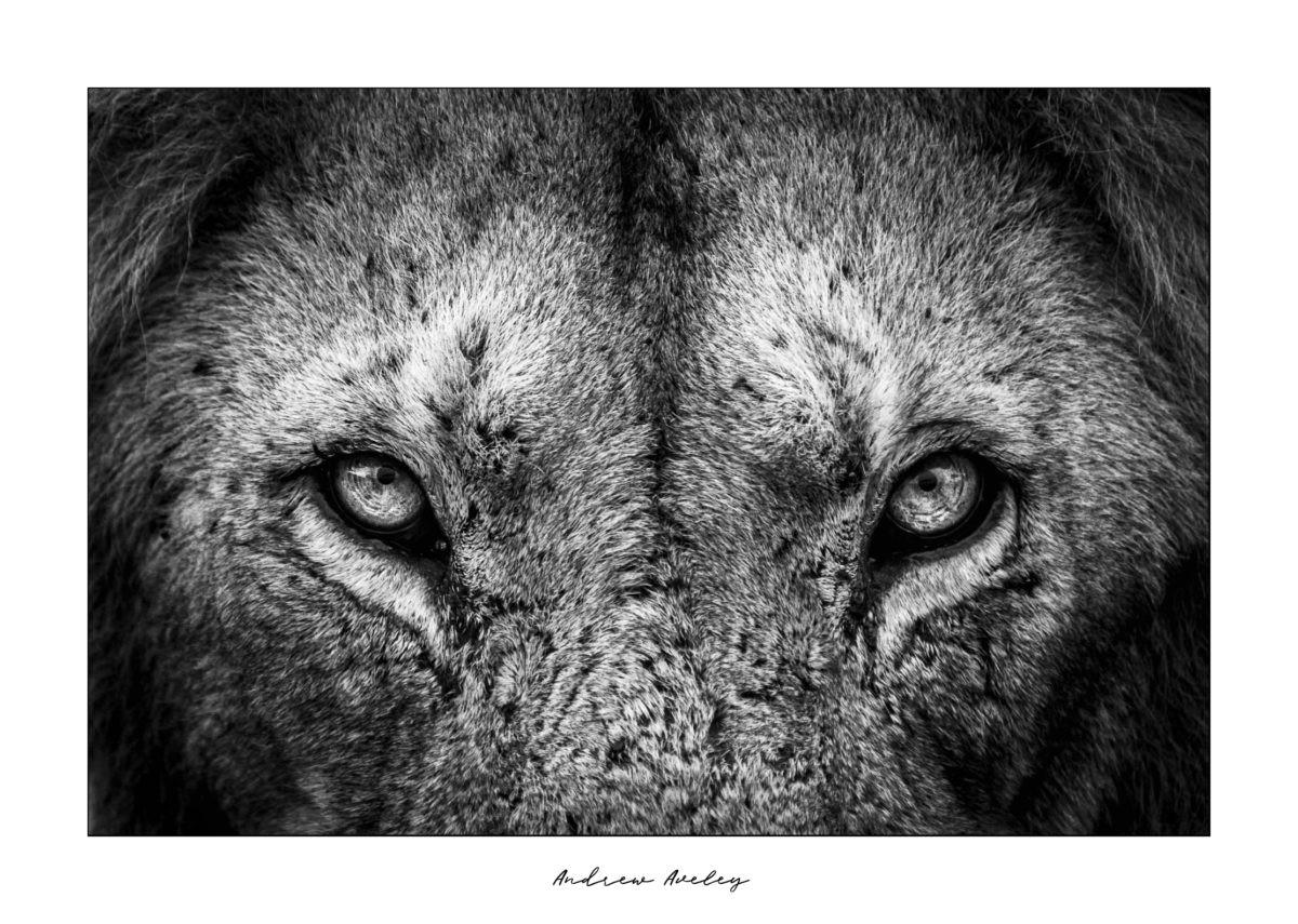 My Africa – Wildlife Photography