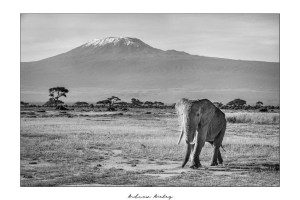 Quintessential Africa - Elephant Fine Art Print by Andrew Aveley - purchase online