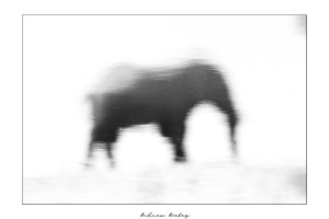 Reflections - Elephant Fine Art Print by Andrew Aveley - purchase online