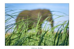 The Vision - Elephant Fine Art Print by Andrew Aveley - purchase online