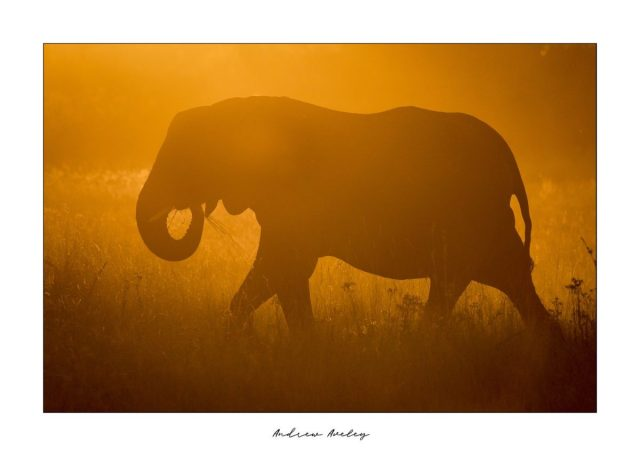 A world leader in Travel and African Photographic Safaris. Andrew and Caroline have 29 years of experience in the industry thus you can be assured that your trip will be a well-orchestrated and memorable all round. by Andrew Aveley - purchase online